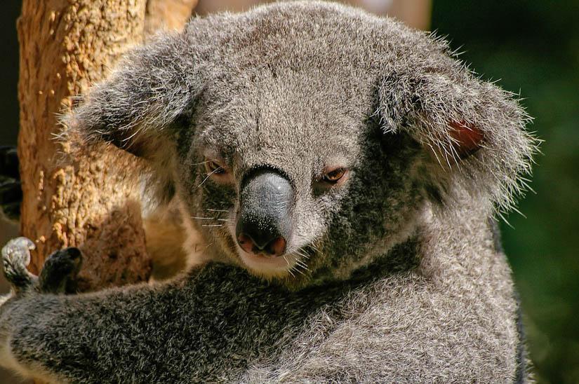 fauna flora y naturaleza en Australia
